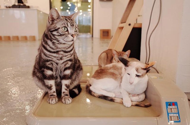 12 Cat Cafes To Visit In Malaysia