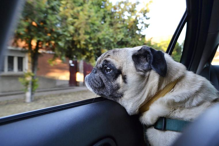 The Dangers Of Leaving Your Dog In The Car