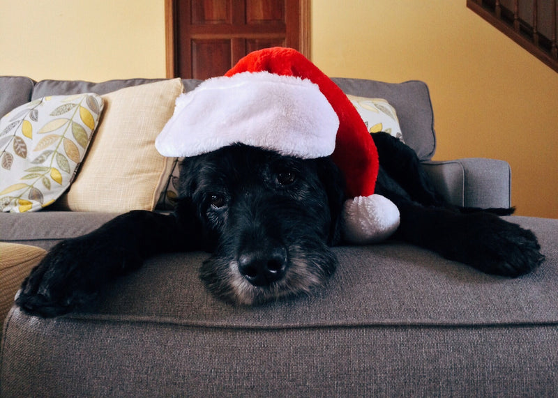 How to Spend Christmas with Your Pet in Malaysia 2019