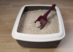 Everything About Cat Litters
