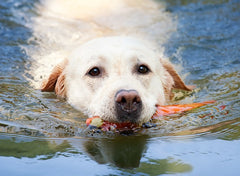 Places To Take Your Dog Swimming In Malaysia