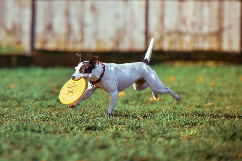 Pup Training 101 - 5 Basic Commands to Get your Dog Started