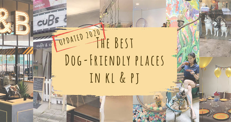 10 Pet Friendly Cafes in KL & Selangor