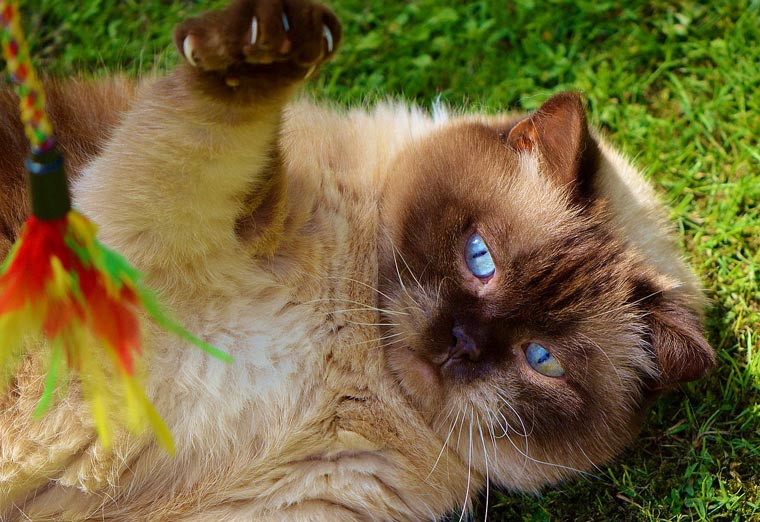 10-things-cats-like