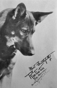 Rin Tin Tin german shepherd dog