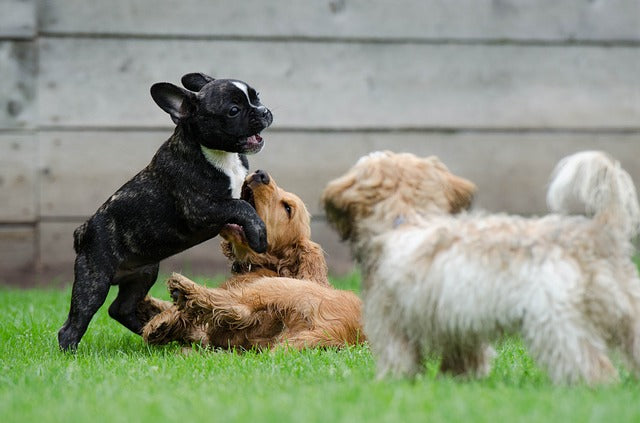 dog-breeds-overlooking-pet-owners-mistakes