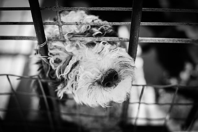 dog-crate-training-mistakes
