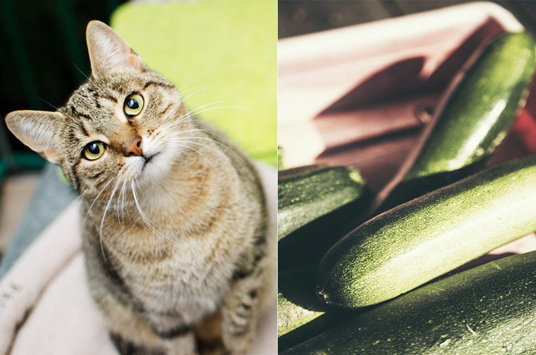 why-cats-frightened-by-cucumbers