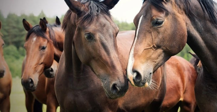 Which Deworming Program is Right for Your Horse
