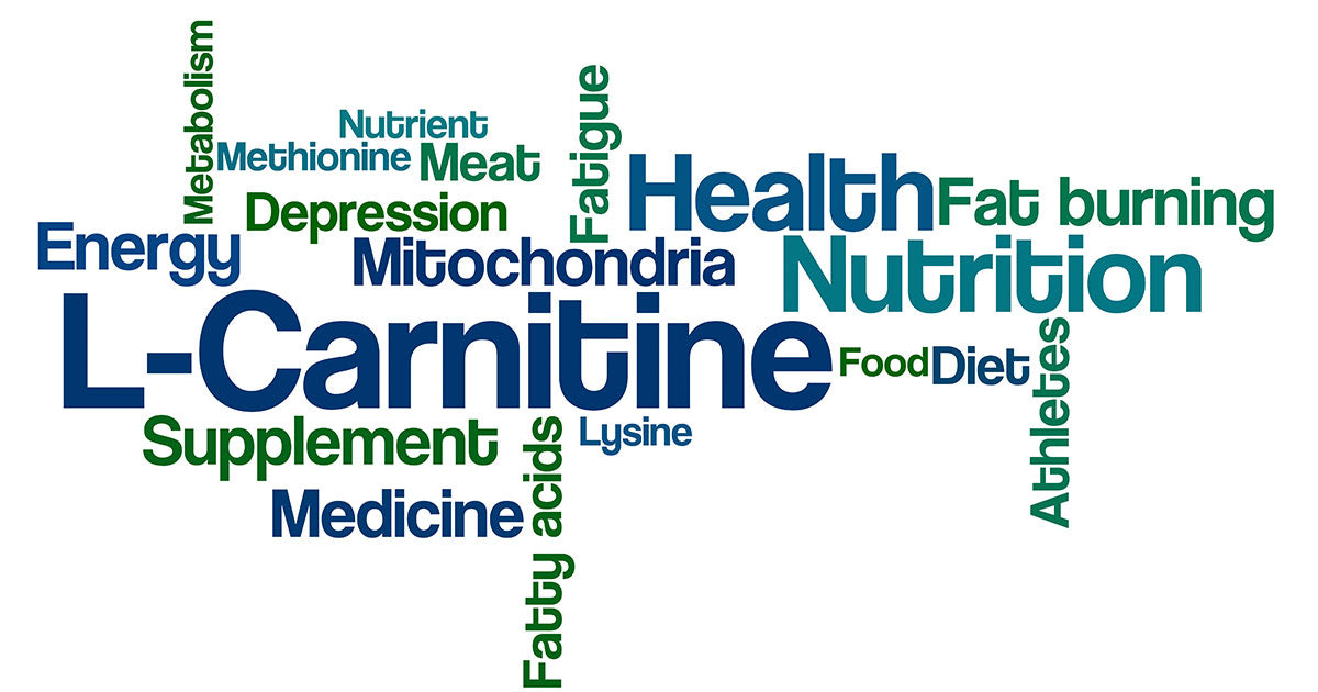 L-Carnitine Word Graph