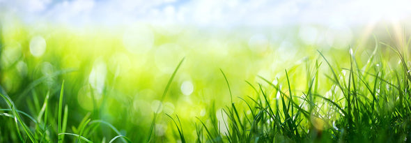 Close-up of bright green grass