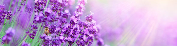Close-up shot of lavender flowers
