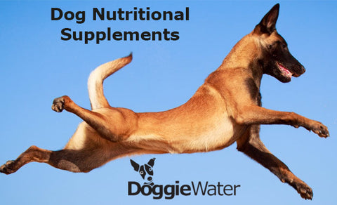Dog Nutritional Supplements