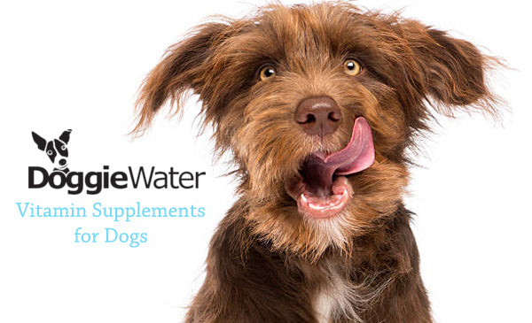 Vitamin Supplements for Dogs
