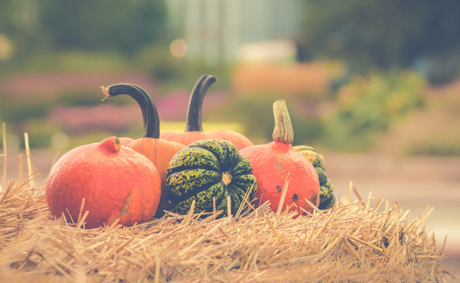 Pumpkins, hayrides and Halloween, oh my!