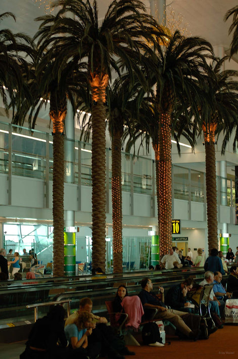 Trees in Airport, Dubai