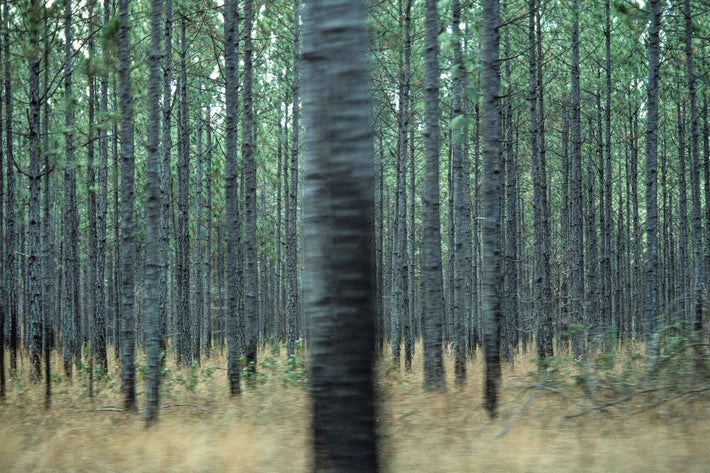 Rubber Trees from Car, Liberia