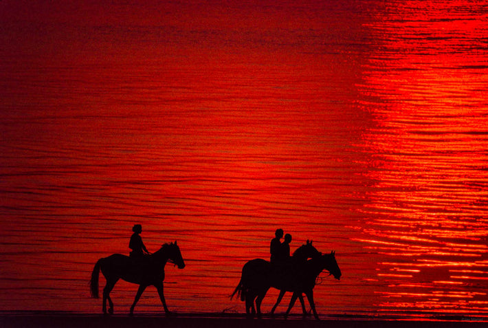 Horses, Red Sunset
