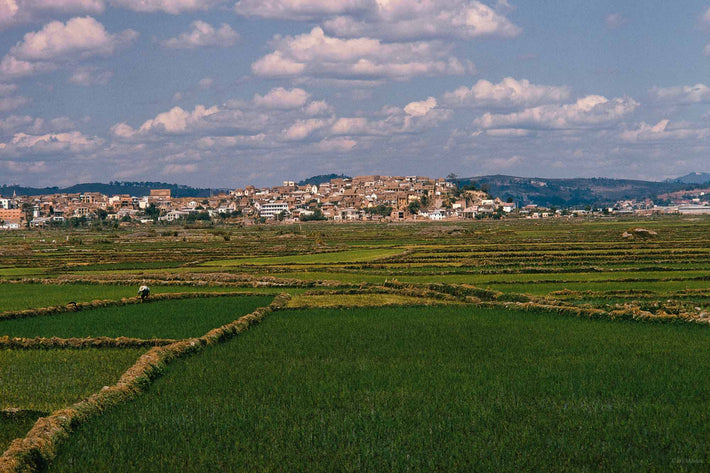Rice Field with Houses, Antananarivo