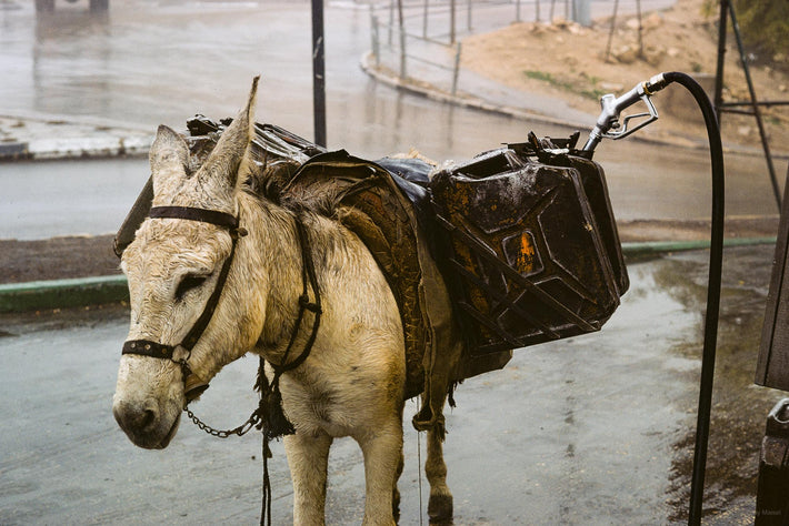 Donkey with Gas Tank, Jerusalem