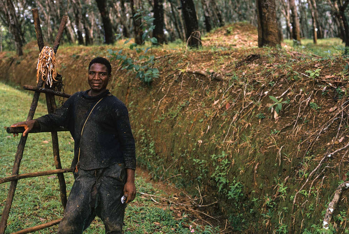 Portrait of Worker on Rubber Plantation, Liberia