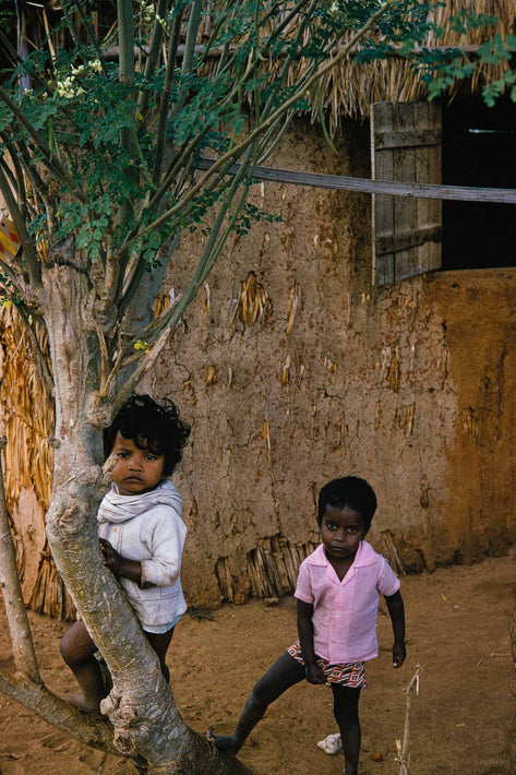 Two Children in Tree, Mauritius