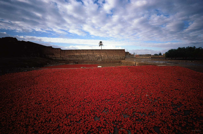 Wide View of Red Peppers with Prominent Clouds, Marrakech