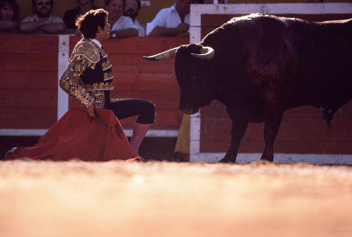 Matador on One Knee in Front of Bull, Arles