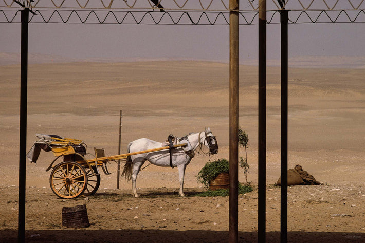 White Horse and Carriage, Egypt