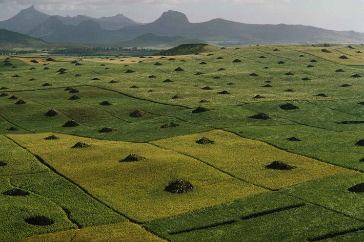 Aerial of Fields with Mound of Rocks in Center, Mauritius