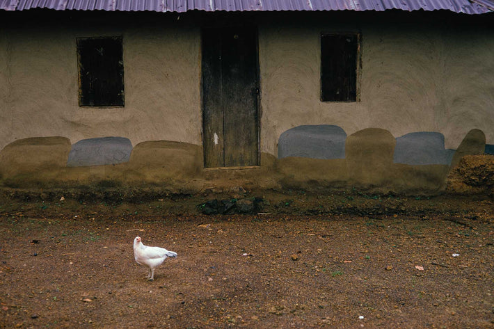 House and Chicken, Liberia