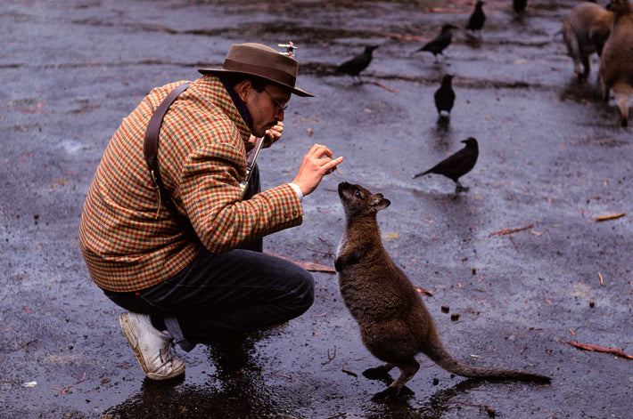 Gregory Heisler Feeding Wallaby, Australia