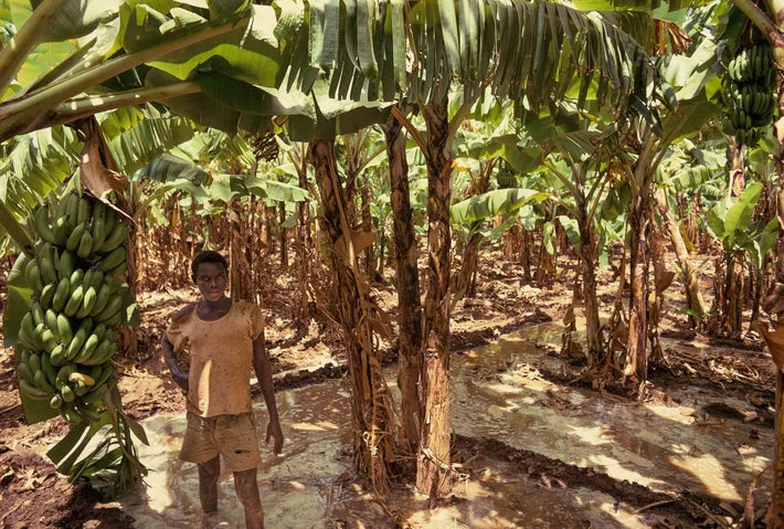 Young Boy in Banana Plants, Somalia