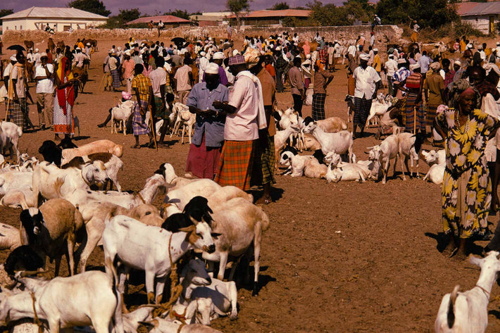 People at Goat Market