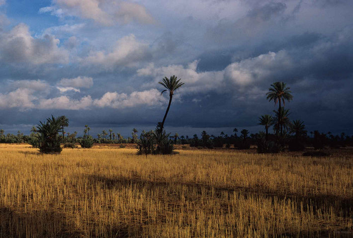 Landscape with Palm Tree and Clouds, Marrakech