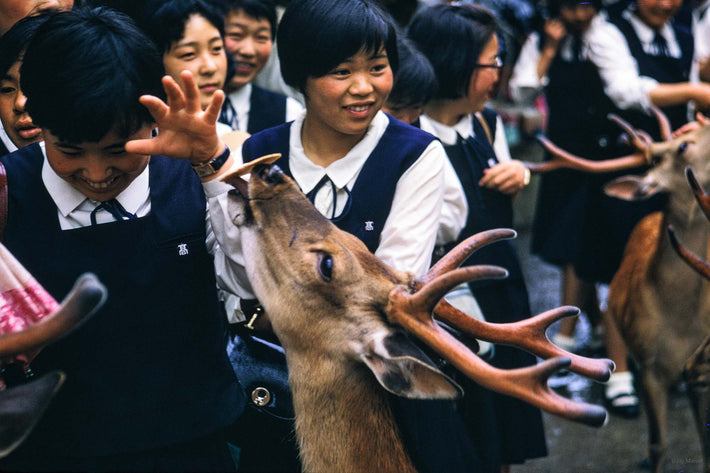Deer and Young Girls, Japan