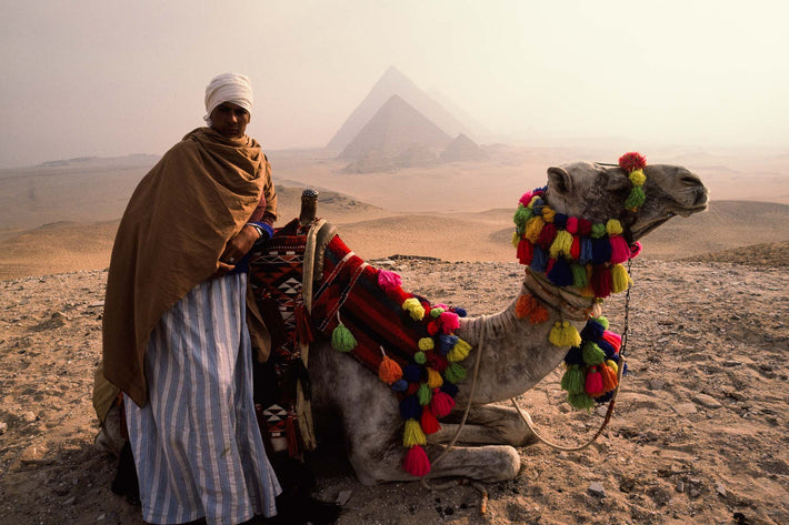 Camel Driver with Camel, Egypt