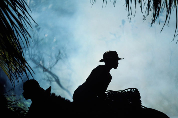 Silhouettes of Coconut Workers, Bahia