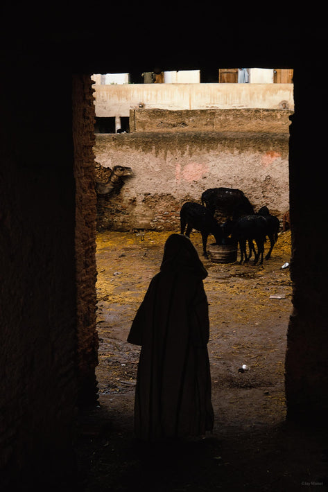 Silhouetted Man in Doorway, Camels, Marrakech