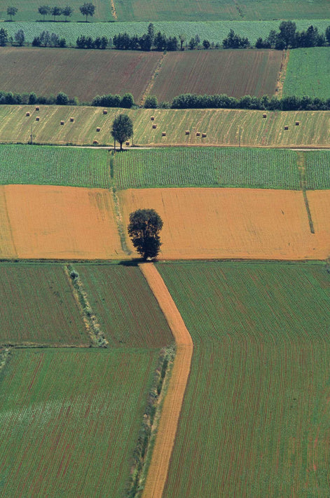 Trees and Pattern of Farmland, Wide-Angle, Vicenza