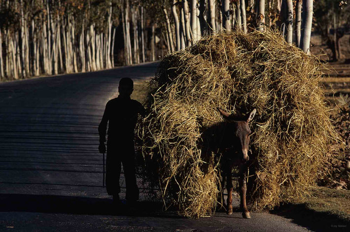 Boy with Donkey and Load of Hay on Forest Road, Iran
