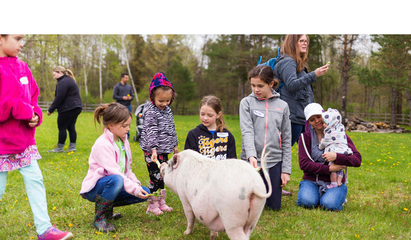 Pigs & Kids at Sanctuary Event
