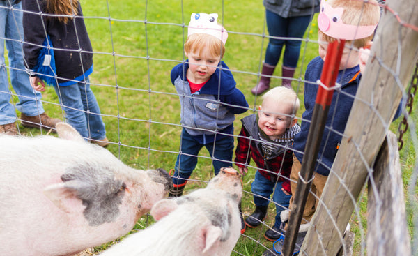 kids and pigs at sanctuary event