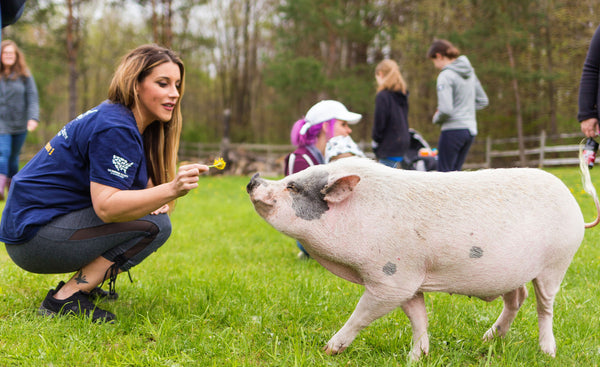 Potbelly pig refuge, Michigan nonprofit animal rescue
