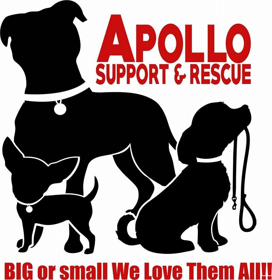 Apollo Support & Rescue Bracelets for a Cause
