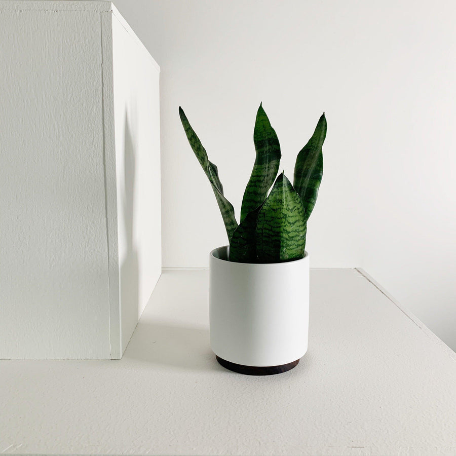 Ceramic Planter with Rosewood Plinth