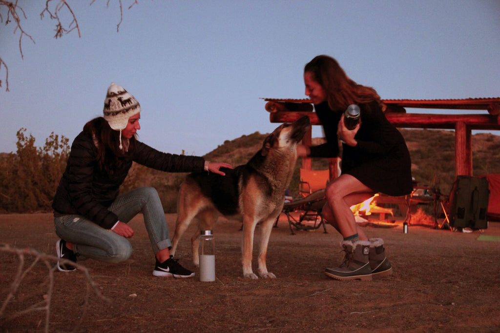 Petting a dog at campground