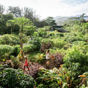 Kauai Farmacy. Sunset Magazine. Photo by Erin Kunkel