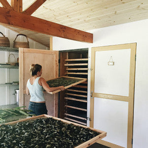 The giant dehydrators and racks of herbs.
