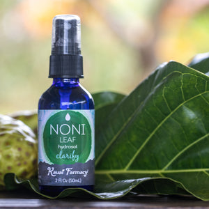 Noni leaf hydrosol steam distilled plant medicine organic 2oz bottle